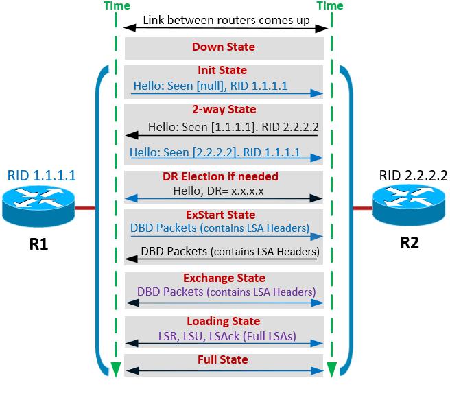 2.4 Диаграмма, демонстрирующая процесс установления соседства и обмен маршрутной информацией в OSPF